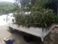 Brightroad Transport Services - Garden Refuse Removers, Gardening & Pool Care Services, cresta, Gauteng