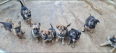 German Shepherd Puppies For Sale -, Dogs & Puppies For Sale, Phoenix, KwaZulu-Natal