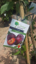 Fruit Trees - For Sale, Gardening Tools & Plants For Sale, Honeydew, Gauteng