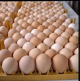 Discount for Farm Fresh Table Eggs, General Items For Sale, Giyani, Limpopo