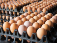 chicken layers, hens & chicken eggs, Food & Catering For Sale, Graaff-Reinet, Eastern Cape
