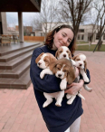 Beagle Puppies For Sale *KUSA Registered*, Dogs & Puppies For Sale, Polokwane, Limpopo